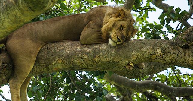 Uganda Wilderness Camping Adventure