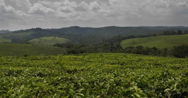 Luxury Tour of Uganda