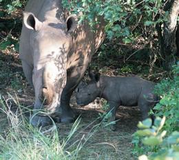 Baby Rhino Born at Ziwa Rhino Sanctuary in Uganda