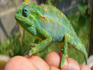 The Most Amazing, Worth Taking Reptile Tour In Uganda