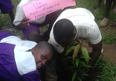 Go Green Tree Planting Campaign In Kihihi Primary School