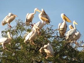 Uganda Birding Expo