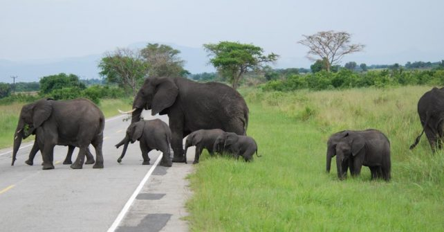 Uganda to host Africa's first Conservation and Tourism Investment Forum