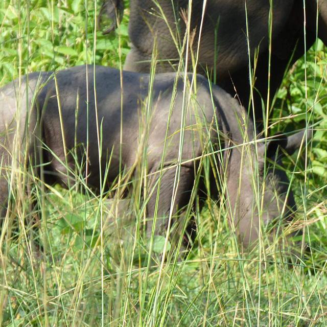 Uganda Gets Another New Born Male Rhino