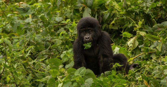8 DAYS DELUXE TOUR OF UGANDA